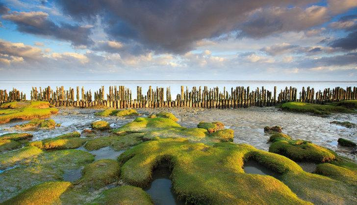 пляжи Нидерландов Ваттовое мооре