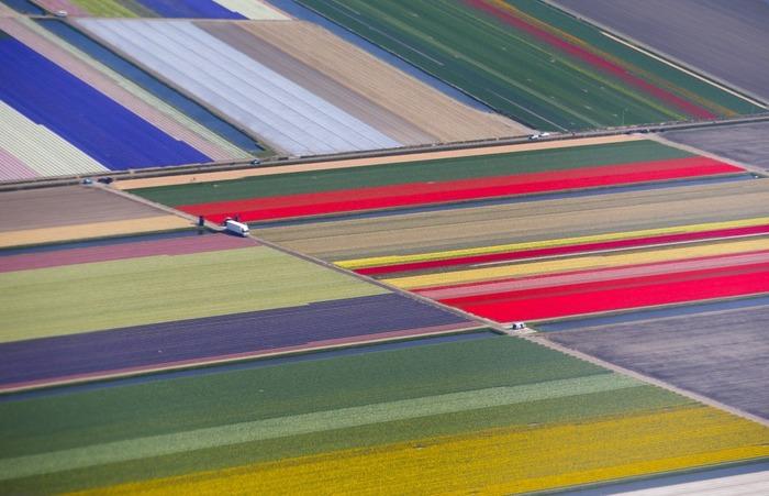 тюльпановые поля с дрона