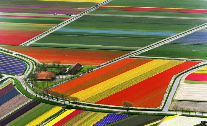 тюльпановые поля вертолетная экскурсия