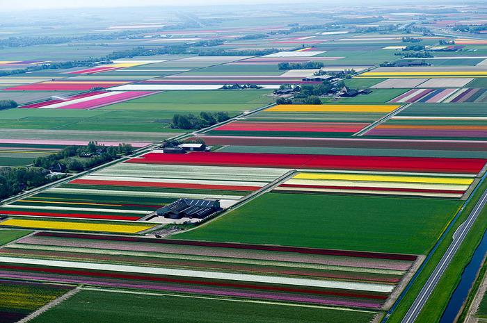 цветочные поля вид с самолета