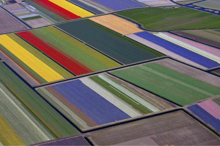 тюльпановые поля аэросъемка