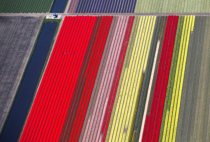 тюльпановые поля яркие полосы