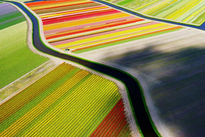 тюльпановые поля тюльпаны и каналы