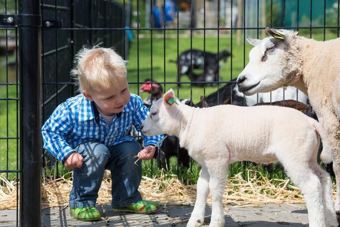 детские фермы ребенок и барашек