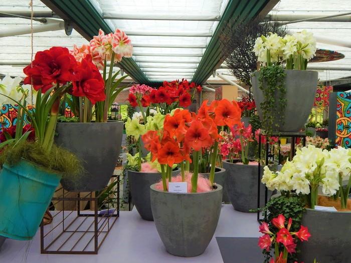 кекенхоф 2019 цветы в горшках