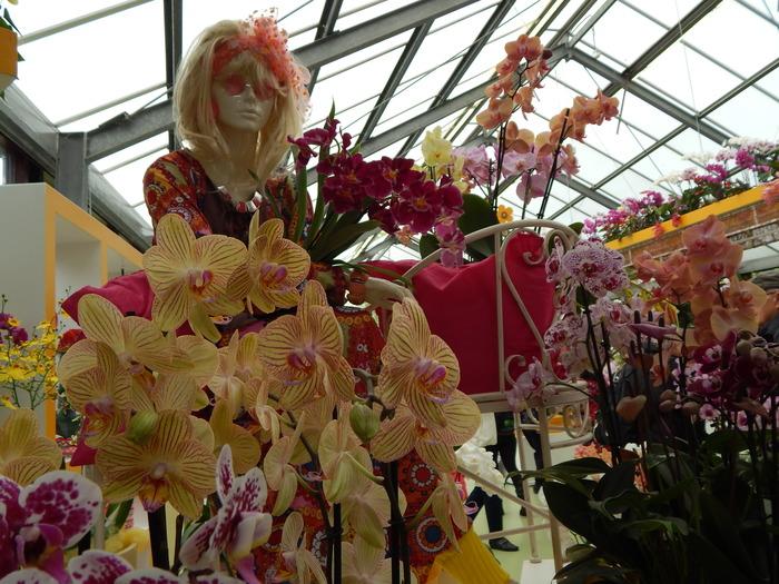 кекенхоф 2019 орхидеи