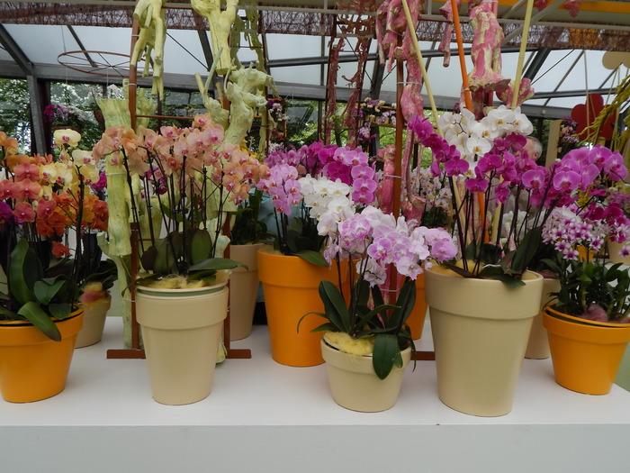 кекенхоф 2019 орхидеи цветные