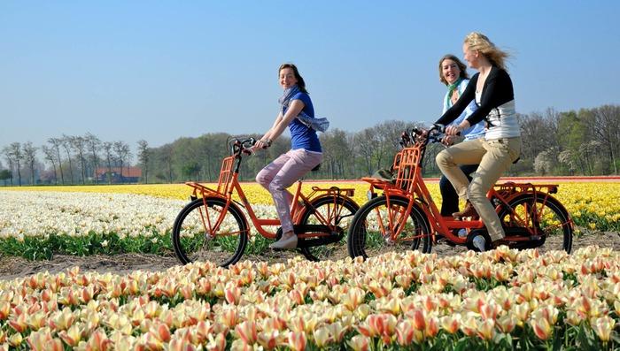 куда поехать из Амстердама Кёкенхоф