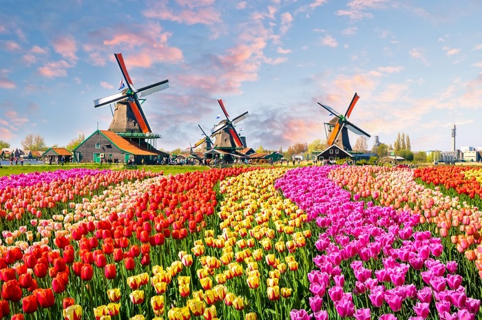 куда поехать из Амстердама мельницы