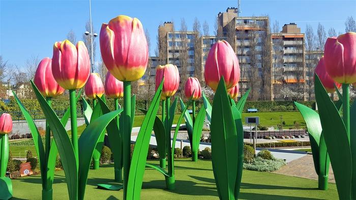 мадюродам тюльпаны