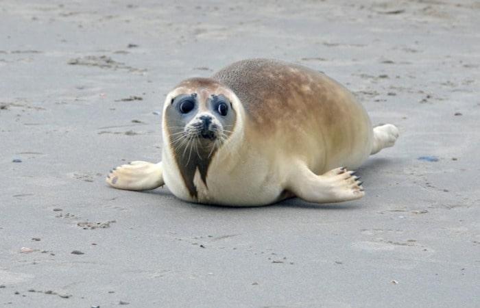 Интересные места в Голландии сафари на тюленей