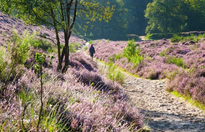Интересные места в Голландии парк Де-Хоге-Велюве