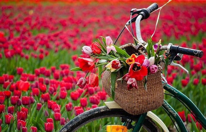 Тюльпановые поля экскурсия на велосипеде