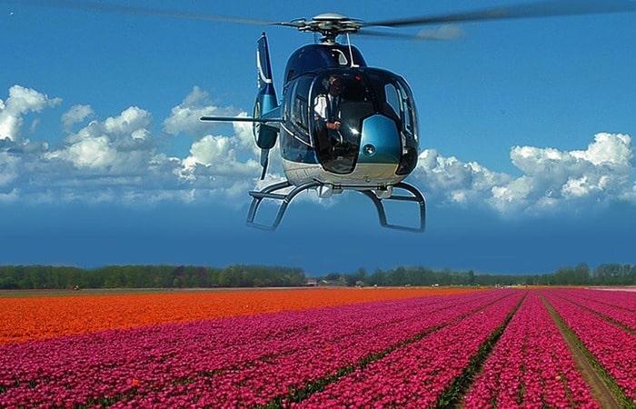 Тюльпановые поля сверху на вертолете